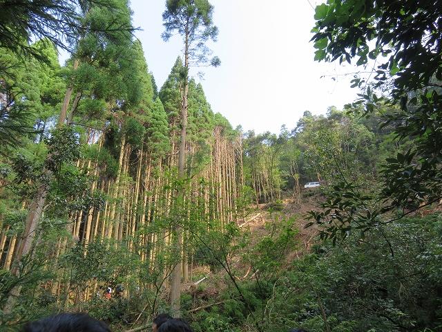 山と木材視察